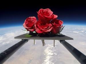roses1_crop